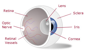 Vision Conditions that Require Corrective Lenses